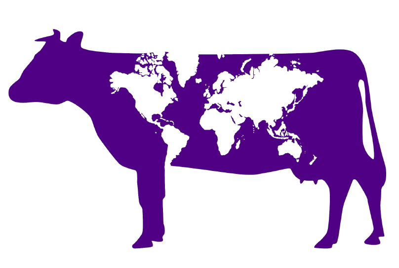 Purple Cow graphic with white world map overlay as spots