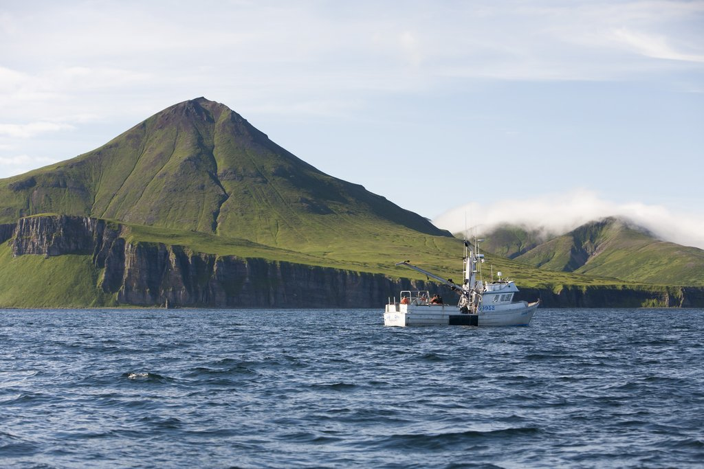 Commercial halibut fishing (longlining) in Ikatan Bay near False Pass in the Aleutian Islands, Alaska. Model and property released.